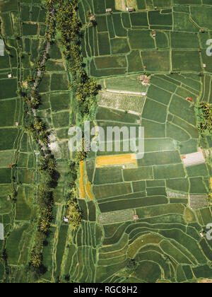 Indonesia, Bali, Aerial view of rice fields from above - Stock Photo