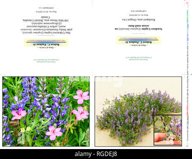 40,721.00293-b & 41,440.04342 Photography Photo Note Card, TWO 5x4 Cards on 11x8.5 paper (print cut fold), wildflowers blue Lupine, pink Geraniums - Stock Photo