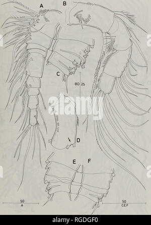 . Bulletin of the Natural History Museum Zoology. PARACYCLOPS REVISION 179. Fig. 55 P. novenarius. Adult female. A, antennule ventral; B, antenna, frontal; C, antennule, second and third segments showing pattern of segmentation, dorsal; D, antenna, coxobasis, caudal; E, F, antennule second and third segments showing variant pattern of segmentation. Scale bars in urn.. Please note that these images are extracted from scanned page images that may have been digitally enhanced for readability - coloration and appearance of these illustrations may not perfectly resemble the original work.. Natural  - Stock Photo