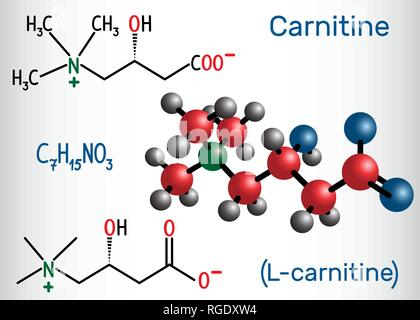 Carnitine (L-carnitine) molecule. Structural chemical formula and molecule model. Vector illustration - Stock Photo