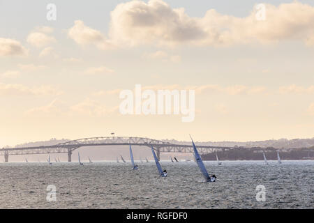 Many sailing boats at dusk in Auckland Harbour, with Auckland Harbour Bridge in the background. - Stock Photo