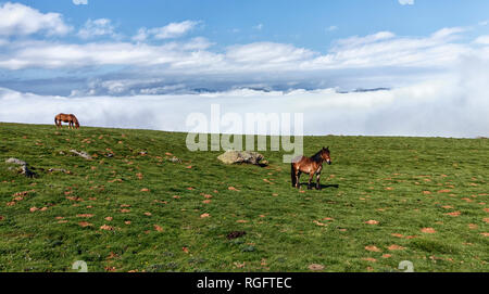 landscape in spanish pyrenees - Stock Photo