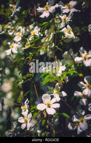 Climbing Flowers Cover a Wall in an Ornamental Garden - Stock Photo