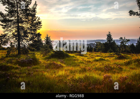 sunrise over the heather landscape with blooming erica flowers, Black Forest, Germany, panorama view at the nature reserve Schliffkopf - Stock Photo
