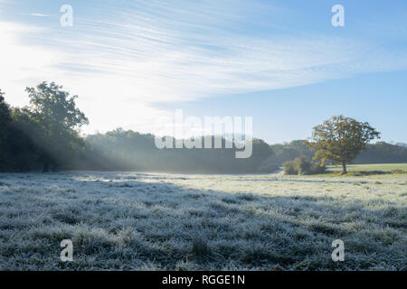 English countryside meadow with morning light rays shining through a tree onto a frosty field - Stock Photo