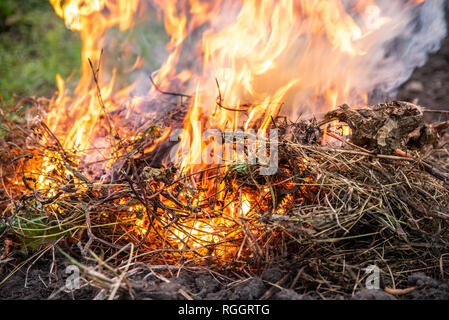 Weed and grass burning on the field, close up. After harvest, autumn time. Environmental pollution and emissions - Stock Photo