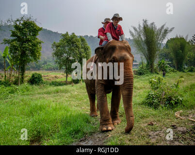 Thailand, Chiang Mai province, Ran Tong Elephant Sanctuary, Elephant trekking - Stock Photo