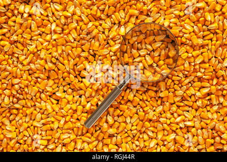 Magnifying glass over corn seed pile, conceptual image for quality control of harvested maize crop kernels