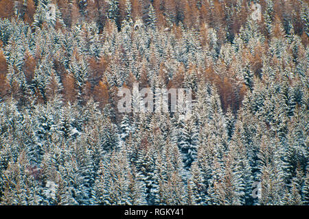 Full frame woods, orange and snowy mixing together. Fall and winter representation. Four seasons, winter is coming geometric, linear background. - Stock Photo