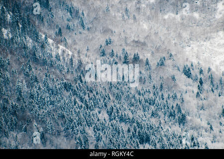 Creating lines and geometrical shapes, a frozen coniferous forest growing in the snow on the mountain, view from the top, high contrast and mystical.  - Stock Photo