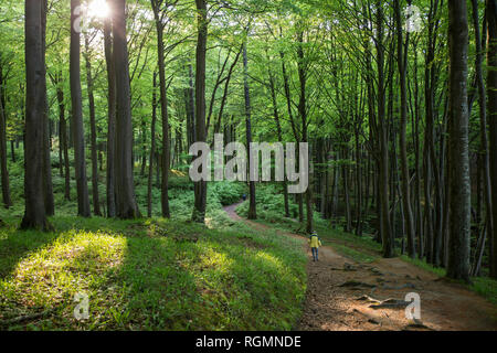 Germany, Mecklenburg-Western Pomerania, Ruegen, Jasmund National Park, hikers in beech forest on hiking trail - Stock Photo