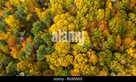 Germany, Hesse, Oestrich-Winkel, Rheingau, Aerial view in autumn - Stock Photo