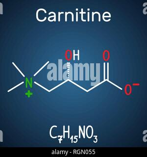 Carnitine (L-carnitine) molecule. Structural chemical formula and molecule model on the dark blue background. Vector illustration - Stock Photo