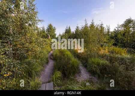 nature trail in the Northern Black Forest, Germany, experience trail Lotharpfad, with different grasses, ferns and birches - Stock Photo