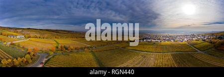 Germany, Hesse, Oestrich-Winkel, Rheingau, Aerial view of vineyards in autumn - Stock Photo