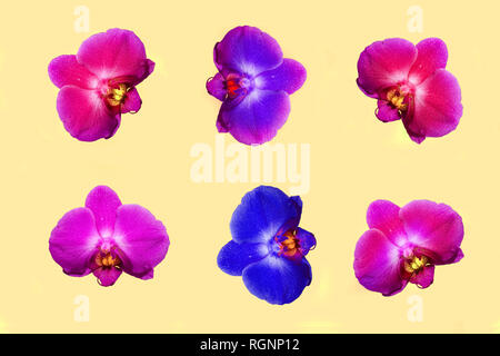 Set of bright orchid flowers isolated on pastel background. Tropical floral pattern. Top view - Stock Photo
