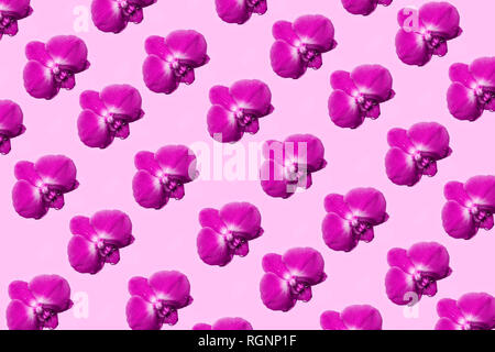 Orchid flowers isolated on pastel background. Tropical floral pattern. Top view - Stock Photo
