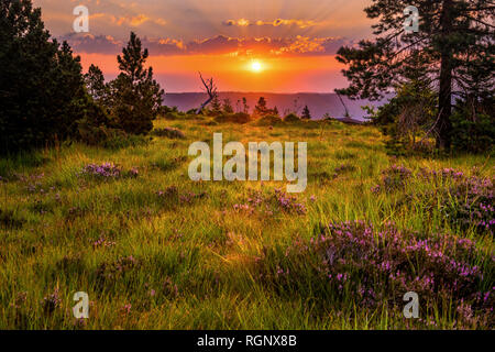 natural landscape and sunrise over the Northern Black Forest, Germany, nature reserve of mountain Schliffkopf with wild flowers - Stock Photo