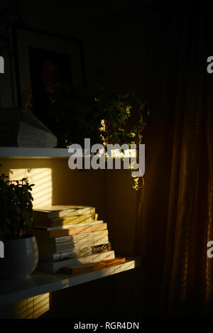 books and plants on a shelf in a lovely sunlight - Stock Photo