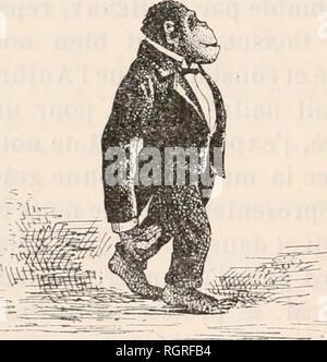 . Bulletin de la Société zoologique de France. Zoology. 190 SÃANCE EXTRAORDINAIRE DU 24 NOVEMVRE 1903 leurs maris ou leurs parents. Vers quatre heures el demie, Consul faisait son apparition et, me distinguant parmi les nombreuses personnes présentes, sans que j'aie pu savoir s'il s'agissait d'une simple coïncidence ou s'il me reconnut vraiment, il accourut vers moi et me sauta au cou. J'avais du reste fait une première connais- sance avec ses manières affectueuses et j'en fus moins étonné que mes voisins. Après une rapide présentation aux dames, tout le monde se réunit dans la sall - Stock Photo
