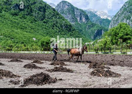 Farmer spreading manure on field with horse, Thethi village, Thethi valley, Albania - Stock Photo