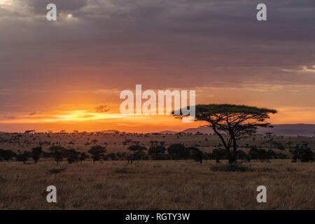 The Serengeti is one of the most popular nature reserves in the world and is also a UNESCO World Heritage Site. It is home to a variety of animals.
