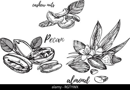 Almonds, Pecan and cashew nuts sketch illustrations. Vector Hand drawn illustrations isolated on white background. - Stock Photo