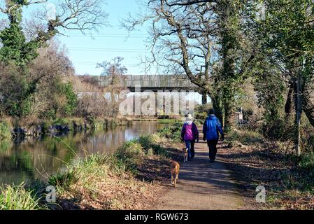Middle aged couple walking dogs by the Basingstoke canal at New Haw on a sunny winters day, Surrey England UK - Stock Photo