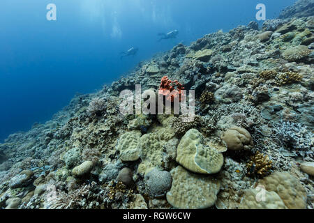 Divers swim past amazing variety of coral on reef - Stock Photo