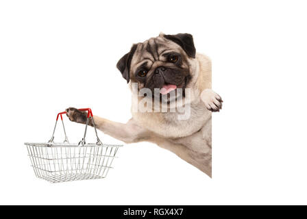 happy smiling pug puppy dog, holding up wire metal shopping basket,behind white banner, isolated - Stock Photo