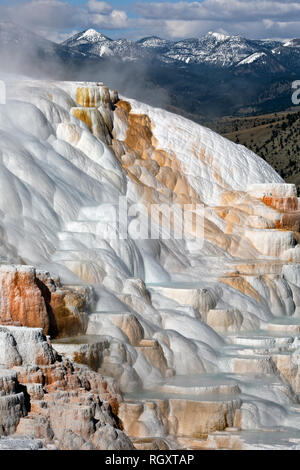 WY03050-00...WYOMING - Cupid Spring on the Upper Terrace of Mammoth Hot Springs in Yellowstone National Park. - Stock Photo