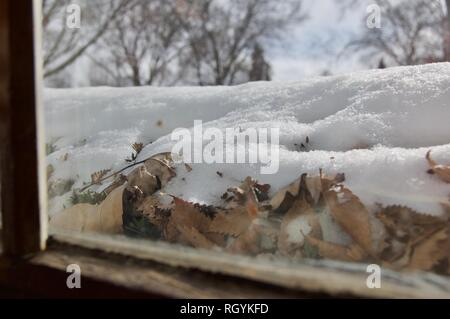 View from Window of Snow on Bushes with Trees in Background - Stock Photo