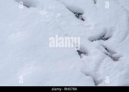 Animal foot prints on deep layer of powdery snow - Stock Photo