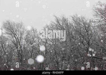 Sun Shining Through the Trees on a Snowy Day - Stock Photo