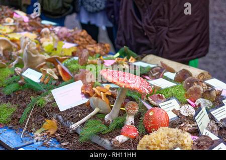 30  Hubertusfest in Springer Wisentgehege,Germany Stock