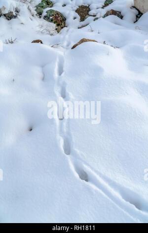 Footprints on powdery snow covering rocky terrain - Stock Photo
