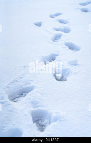 Footprints on powdery snow covering the ground - Stock Photo