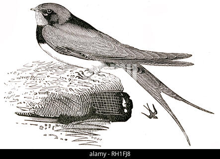 Taken From 'The Natural History of Selborne' By The Rev Gilbert White, 1875 Edition - Stock Photo