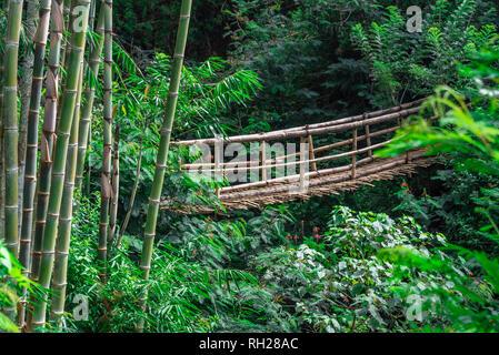 Bamboo bridge in the jungle - Stock Photo