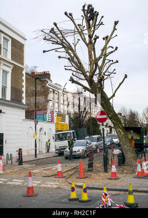 tree trimming by council workers Kentish town high street London - Stock Photo