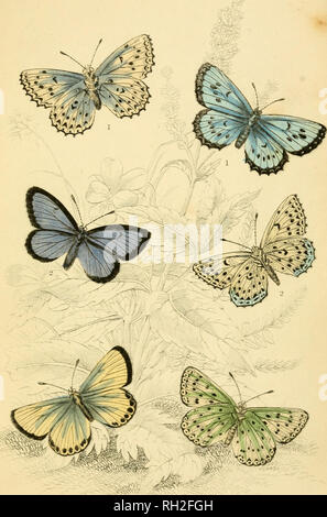 . British butterflies. Werner, Abraham Gottlob, 1749-1817; Butterflies. PLATE 32. Please note that these images are extracted from scanned page images that may have been digitally enhanced for readability - coloration and appearance of these illustrations may not perfectly resemble the original work.. Duncan, James, 1804-1861; Cuvier, Georges, baron, 1769-1832; Jardine, William, Sir, 1800-1874; Burth, Edward Henry, former owner. DSI. Edinburgh : W. H. Lizars ; London : Henry G. Bohn - Stock Photo