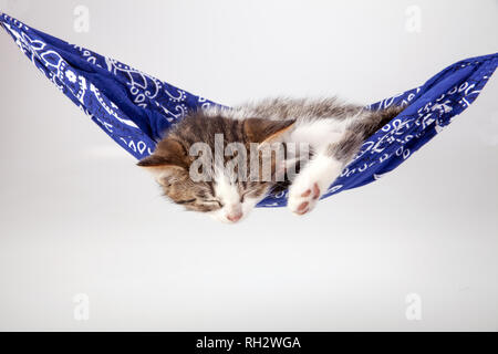 Little kitten sleeps on a coverlet. Small cat sleeps sweetly as a small bed. Sleeping cat in home on a blur light background. Cats rest after eating. - Stock Photo