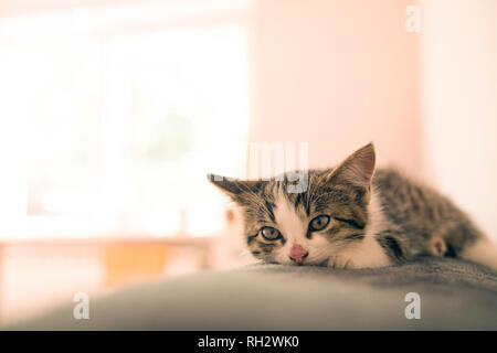 Little kitten lying on a coverlet. Small cat sleeps sweetly as a small bed. Sleeping cat in home on a blur light background. Cats rest after eating. - Stock Photo