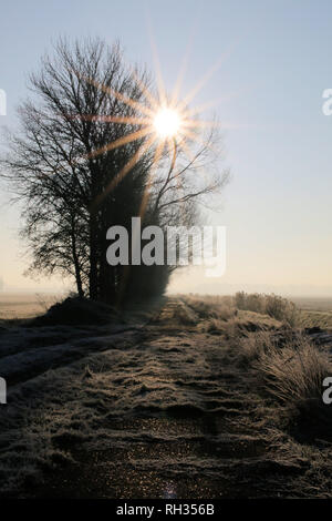 Low sun shining through treetops on a frosty morning - Stock Photo