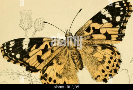 . British butterflies. Werner, Abraham Gottlob, 1749-1817; Butterflies. PLATE 19.. Please note that these images are extracted from scanned page images that may have been digitally enhanced for readability - coloration and appearance of these illustrations may not perfectly resemble the original work.. Duncan, James, 1804-1861; Cuvier, Georges, baron, 1769-1832; Jardine, William, Sir, 1800-1874; Burth, Edward Henry, former owner. DSI. Edinburgh : W. H. Lizars ; London : Henry G. Bohn - Stock Photo