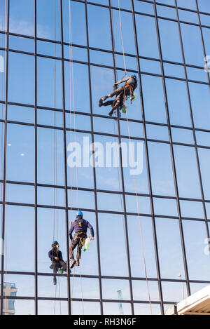 Window cleaners abseiling the Hyatt Regency Hotel in Birmingham cleaning the reflective windows - Stock Photo