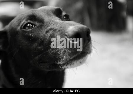 Portrait of a friendly black dog being petted by children, Finch Hatton, Queensland 4756, Australia - Stock Photo