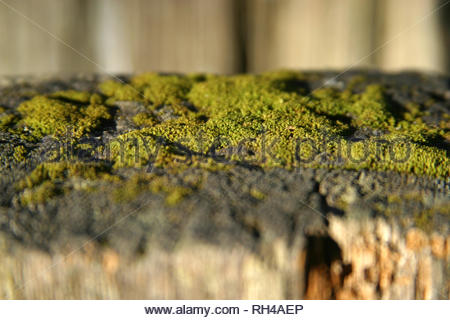 Moss on fencepost, Castle Crags Trail, Castle Crags State Park, California, USA - Stock Photo