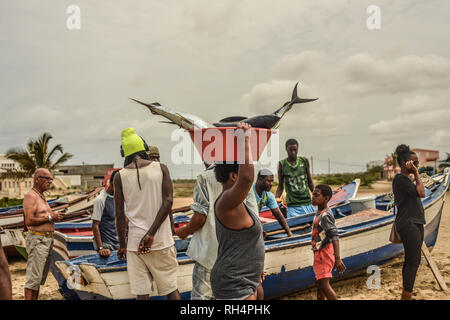 Cape Verde, Maio Island: fishermen back from a fishing trip, on the beach of Porto Ingles (Vila do Maio). Fish unloading: woman carrying a tray contai - Stock Photo