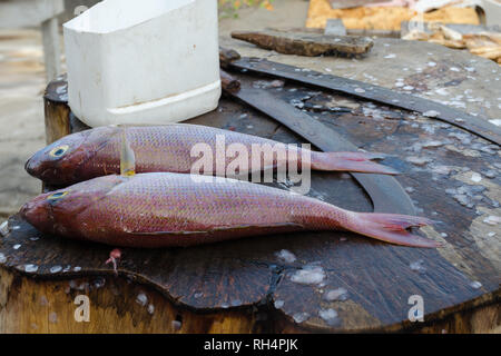 Fresh fish Red Snapper or Threadfin bream before cooking on the cutting table. Fish street makret in Sri Lanka. - Stock Photo
